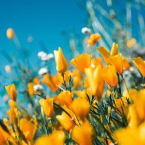 Taste of Spring TO-GO MENU
